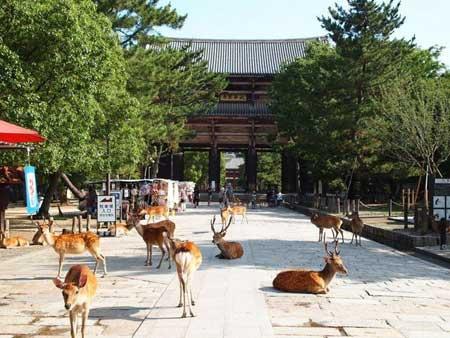 奈良県でセフレを見つける!SNSアプリでセックスフレンド探し!